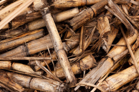 kleingeschnittener Zuckerrohr