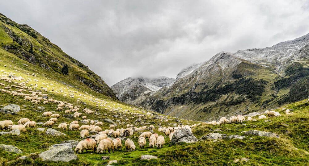 grünes Tal mit Schafen eingerahmt von Bergen