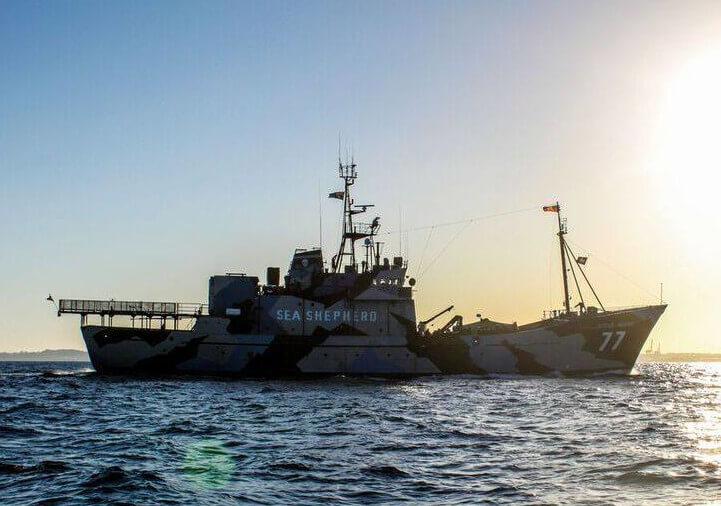 Sea Shepherd Schiff Steve Irvin